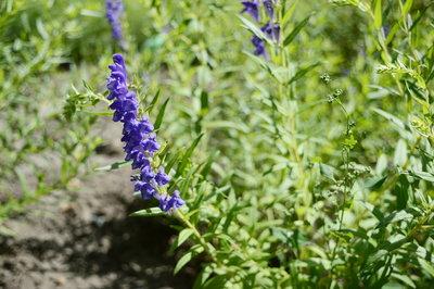 alergie la plante simptome
