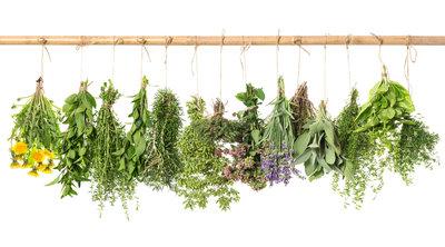 cauzele alergiilor la plante
